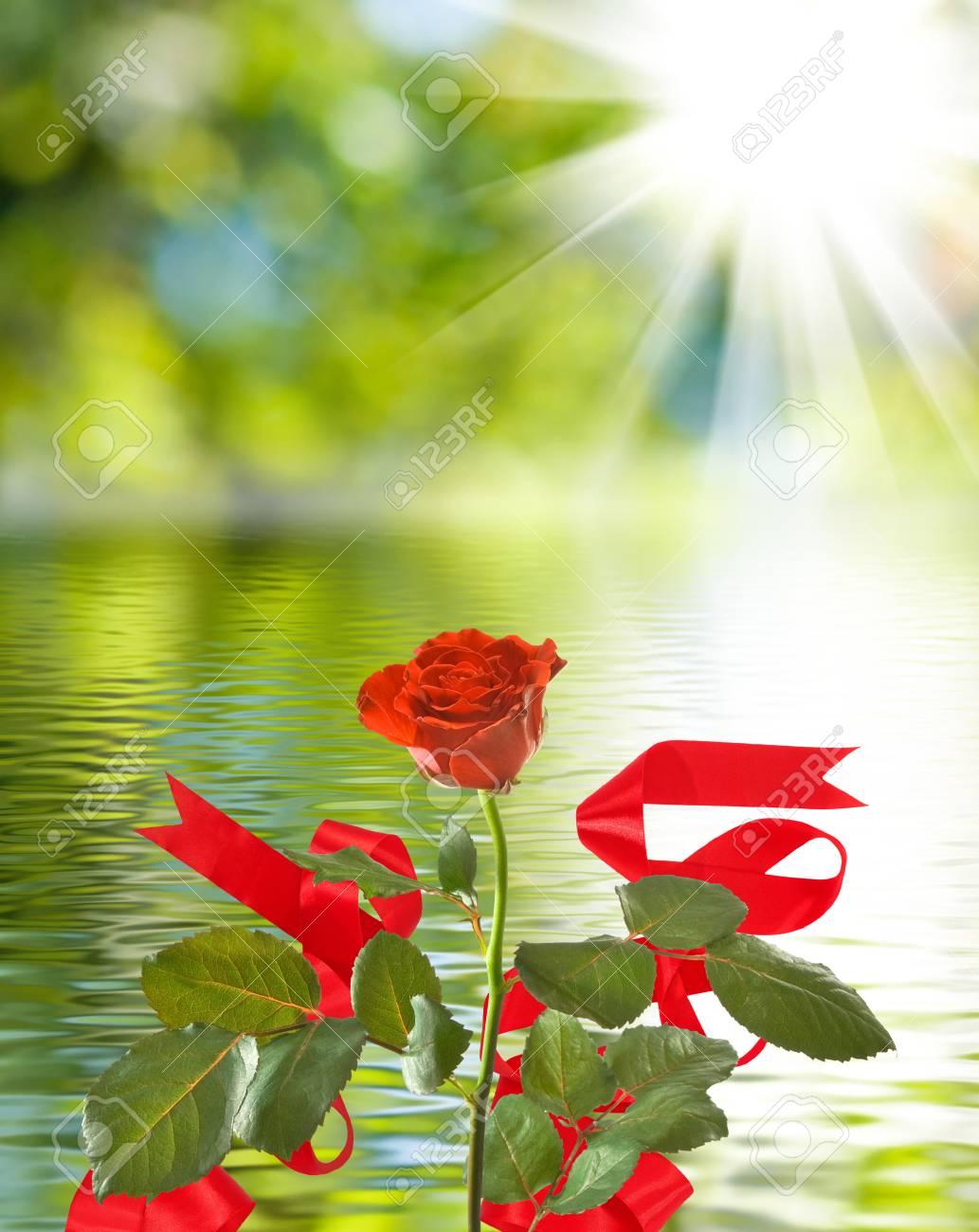 flor hermosa en la flor color de rosa hermosa del fondo del agua en