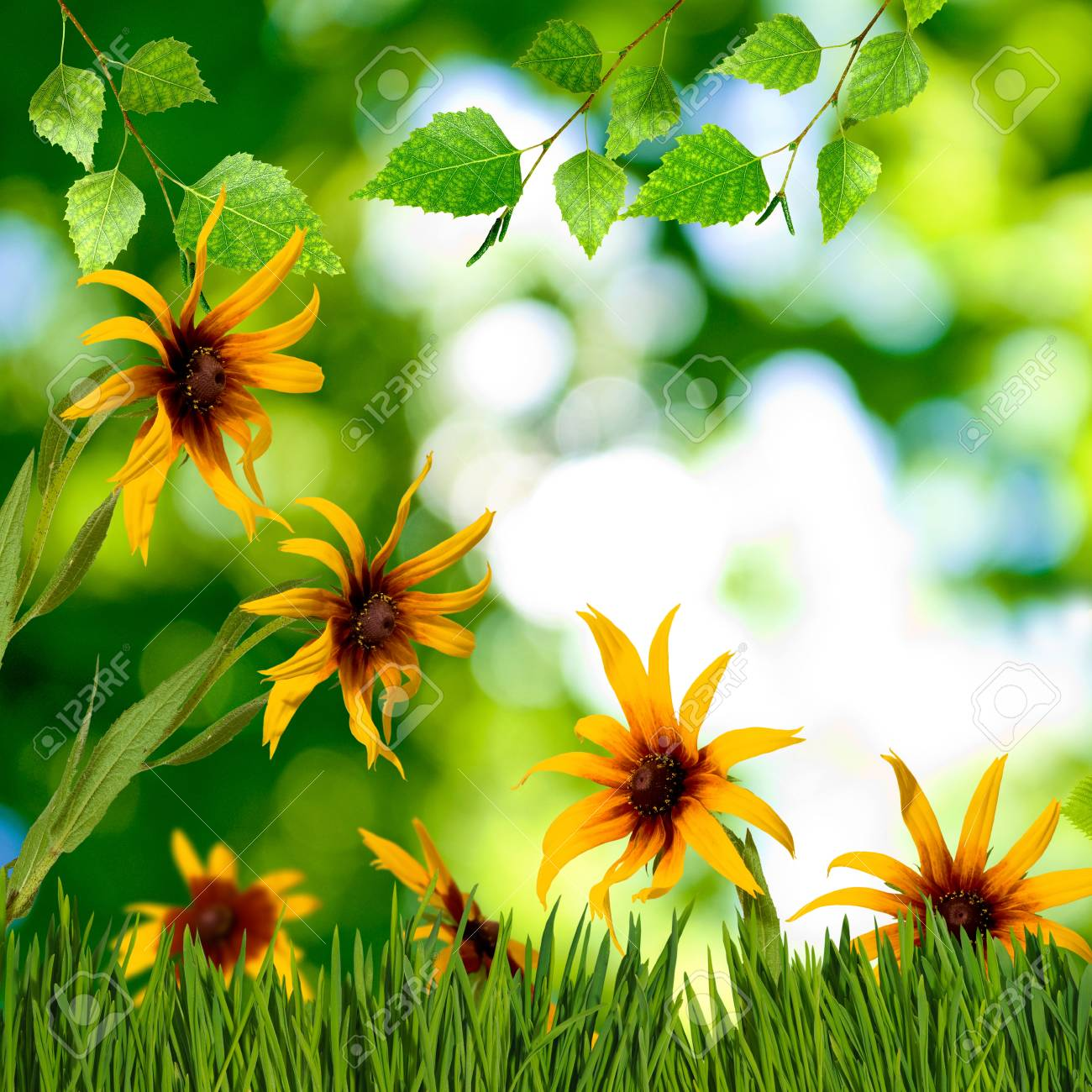 Image Of Beautiful Flowers In Garden Close Up Stock Photo Picture