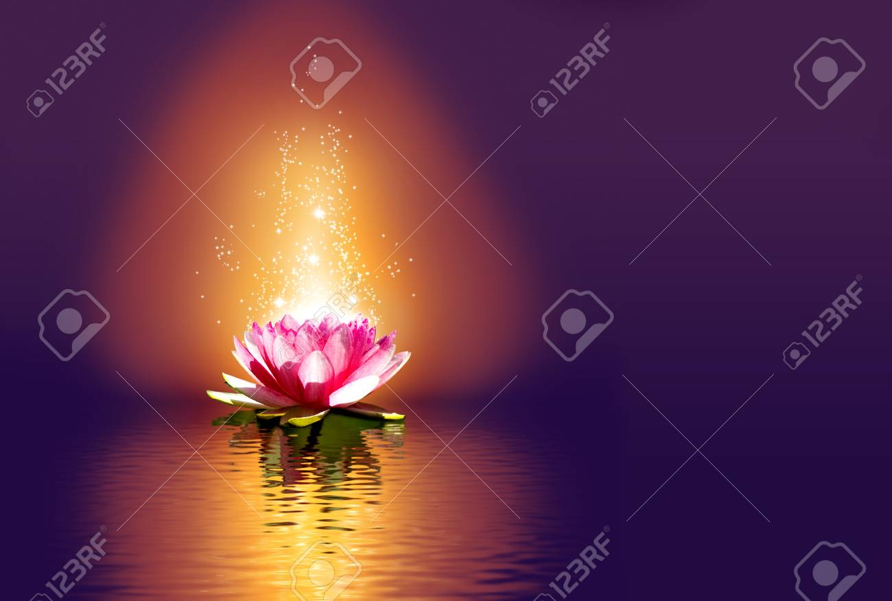 Lotus Flower On The Water At Night Stock Photo Picture And Royalty