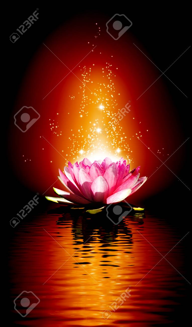 Image Of A Lotus Flower On The Water At Night Stock Photo Picture