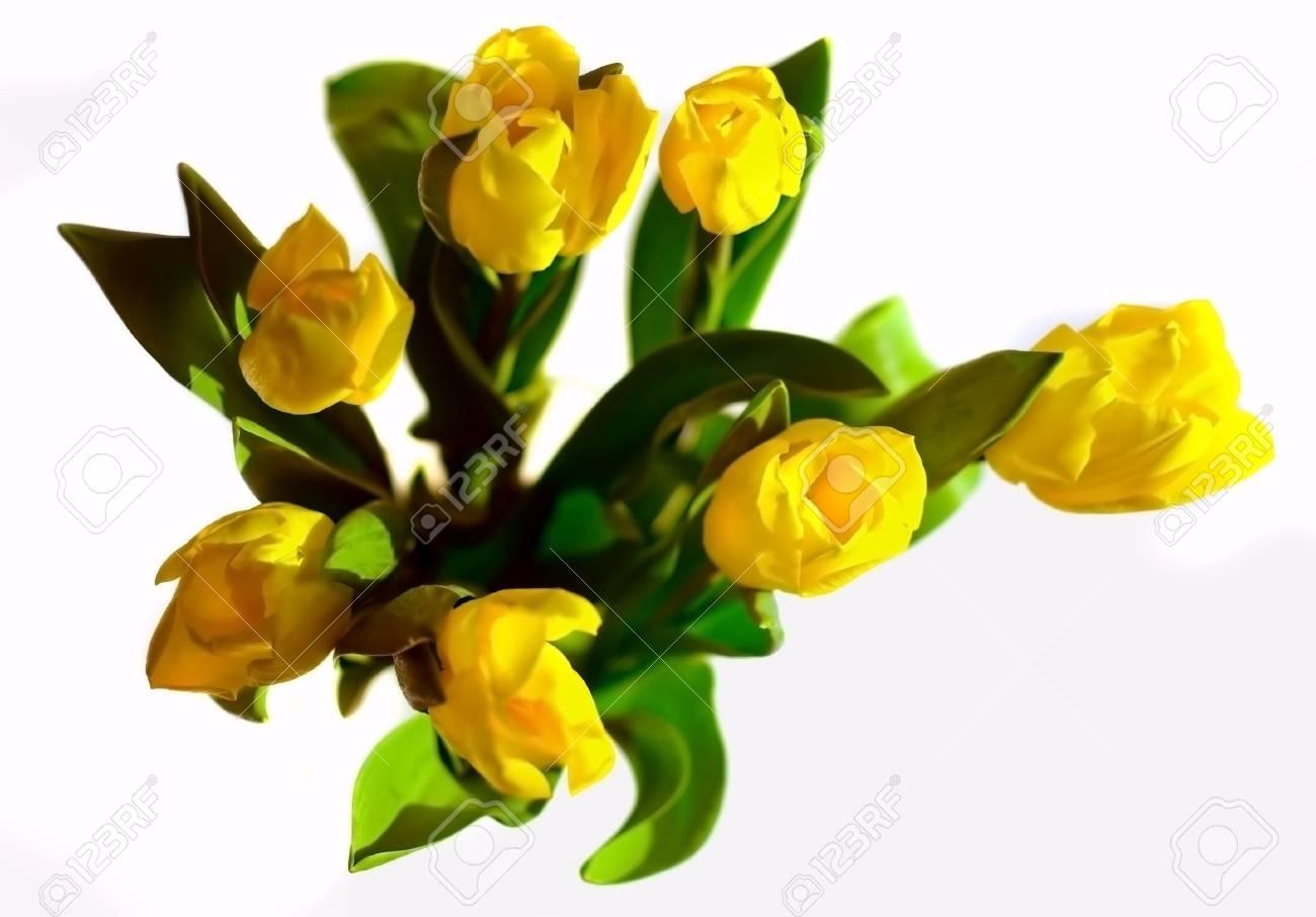 Yellow tulips bunch on white background. Stock Photo - 2669411