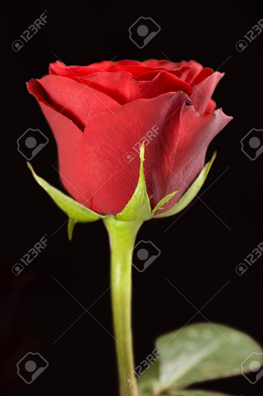 Single Red Rose Aesthetic Background Www Picturesboss Com