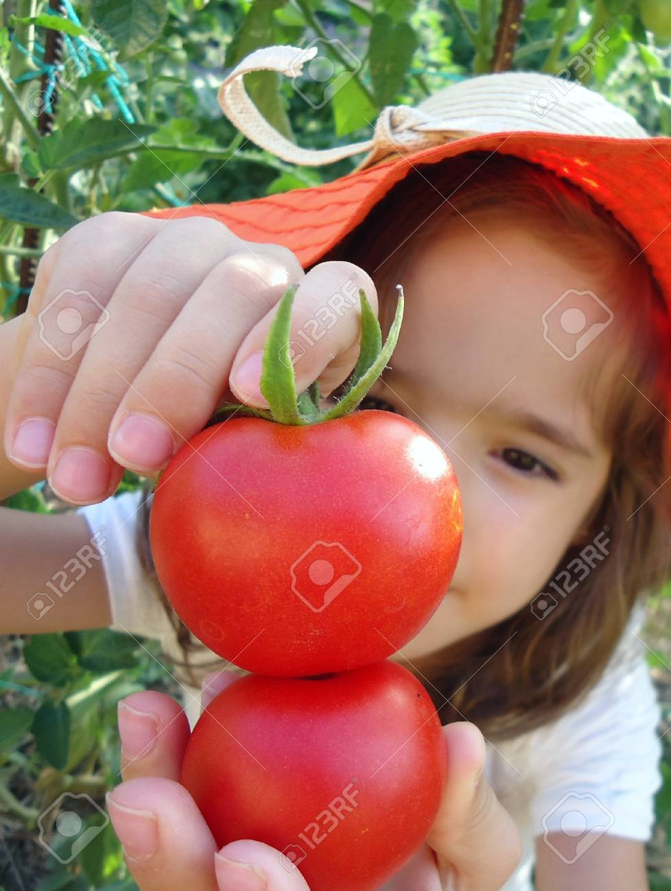 Little girl playing with tomatoes in organic garden Stock Photo - 22538212