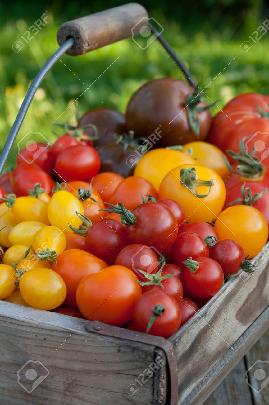 basket with different varieties of tomatoes Stock Photo - 16317767