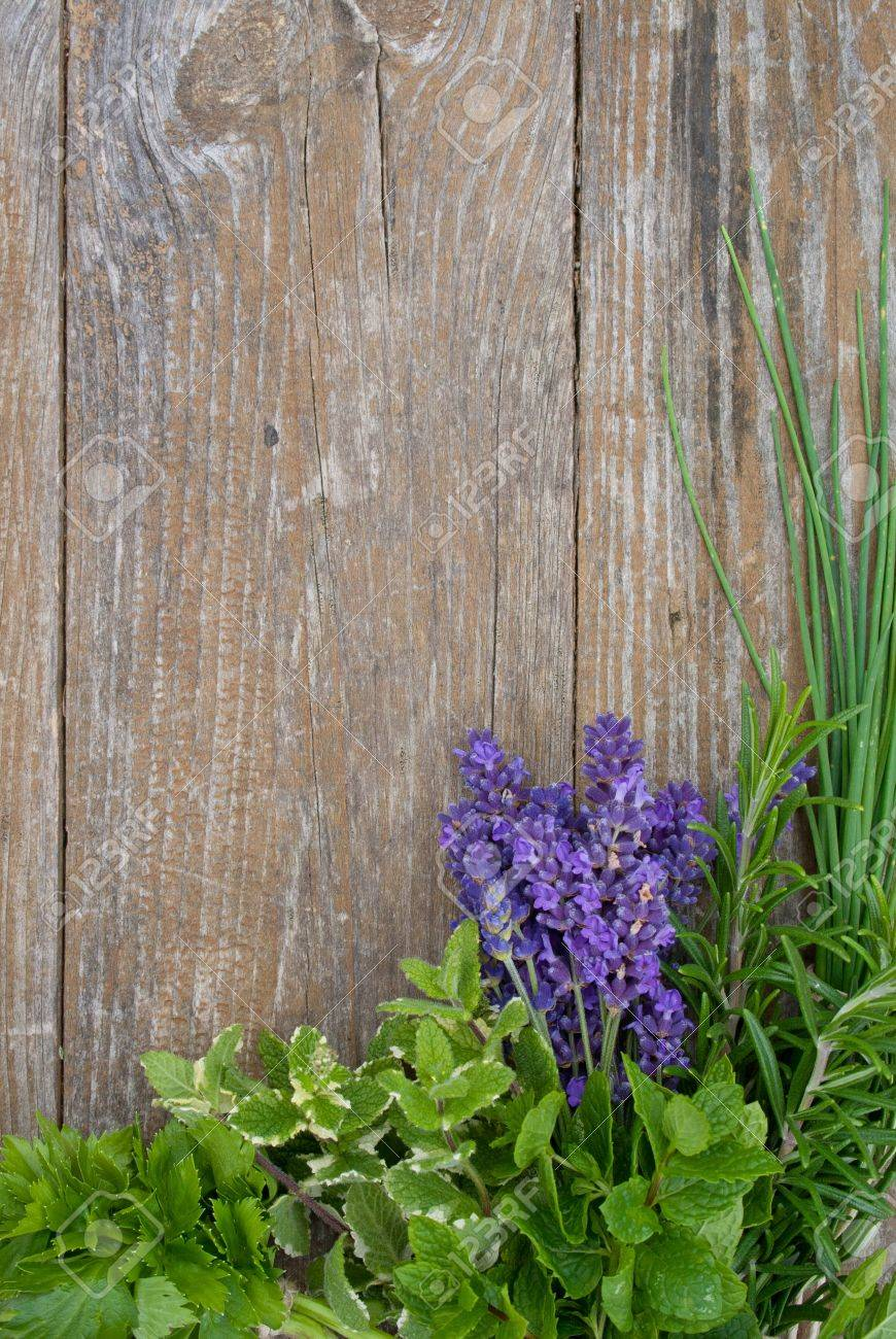 Lavender, rosemary, cut Lach, tarragon,  mint, celery, borage, lemon balm Standard-Bild - 16614108