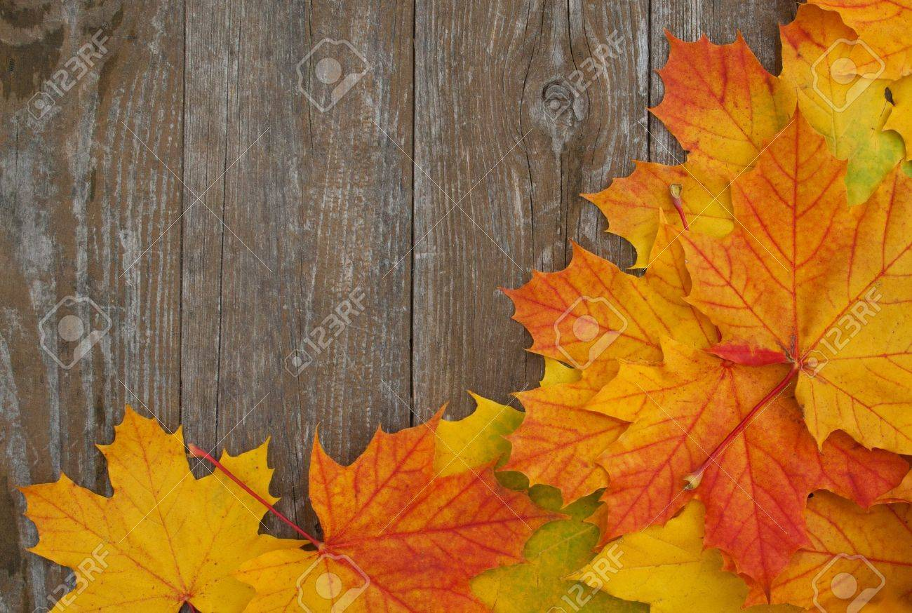 colored leaves on wooden ground Standard-Bild - 16827752