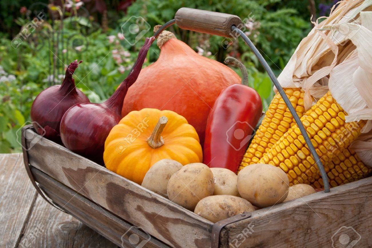 basket with vegetables - 16623699