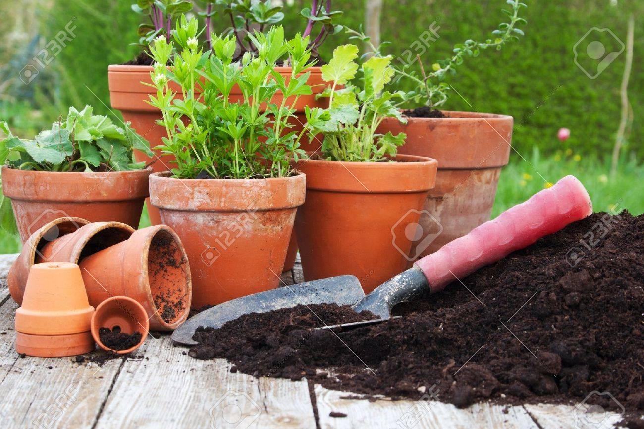 flower pots Standard-Bild - 16623842