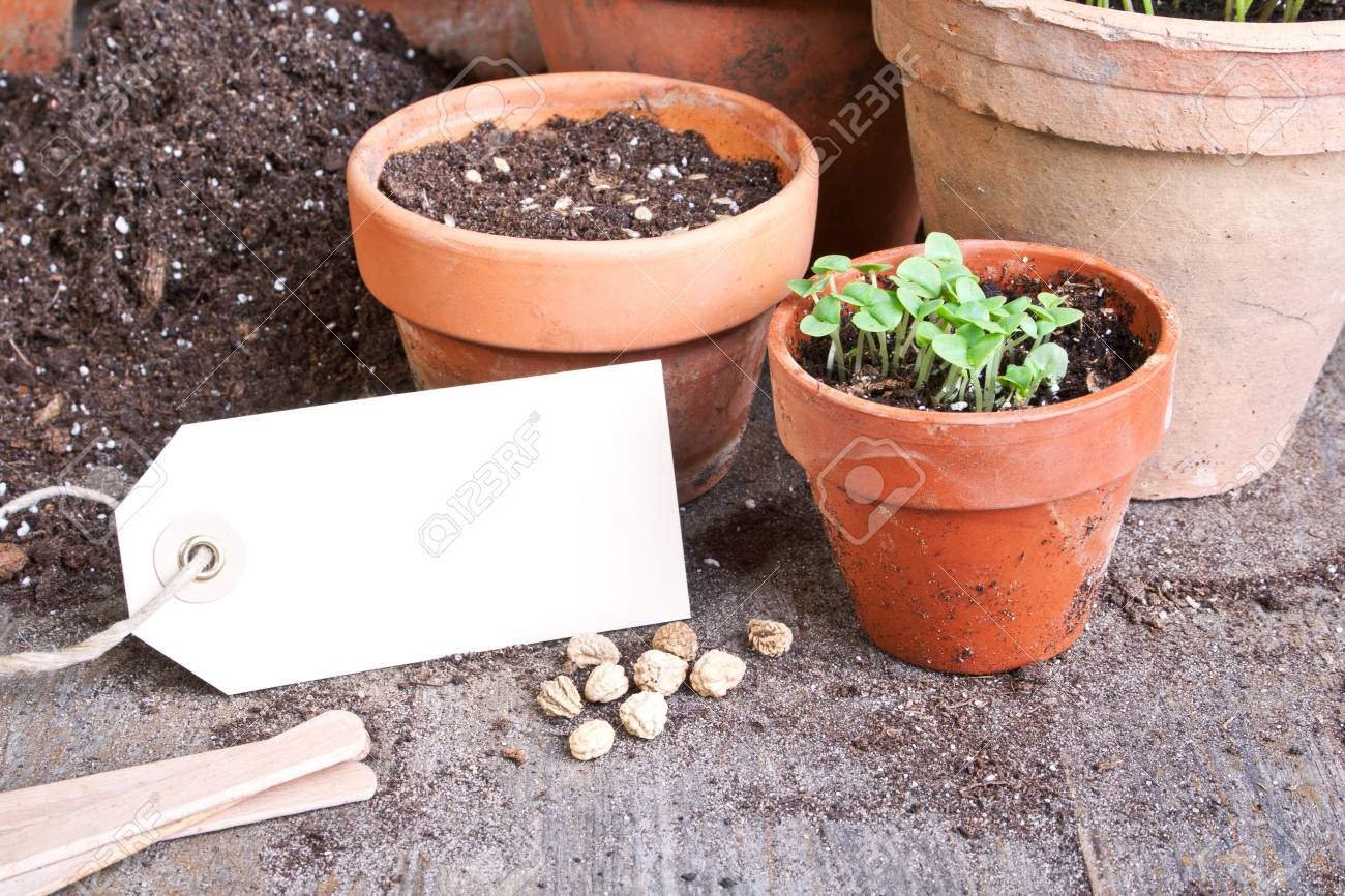 flower pots with plants and trailer Stock Photo - 18854592