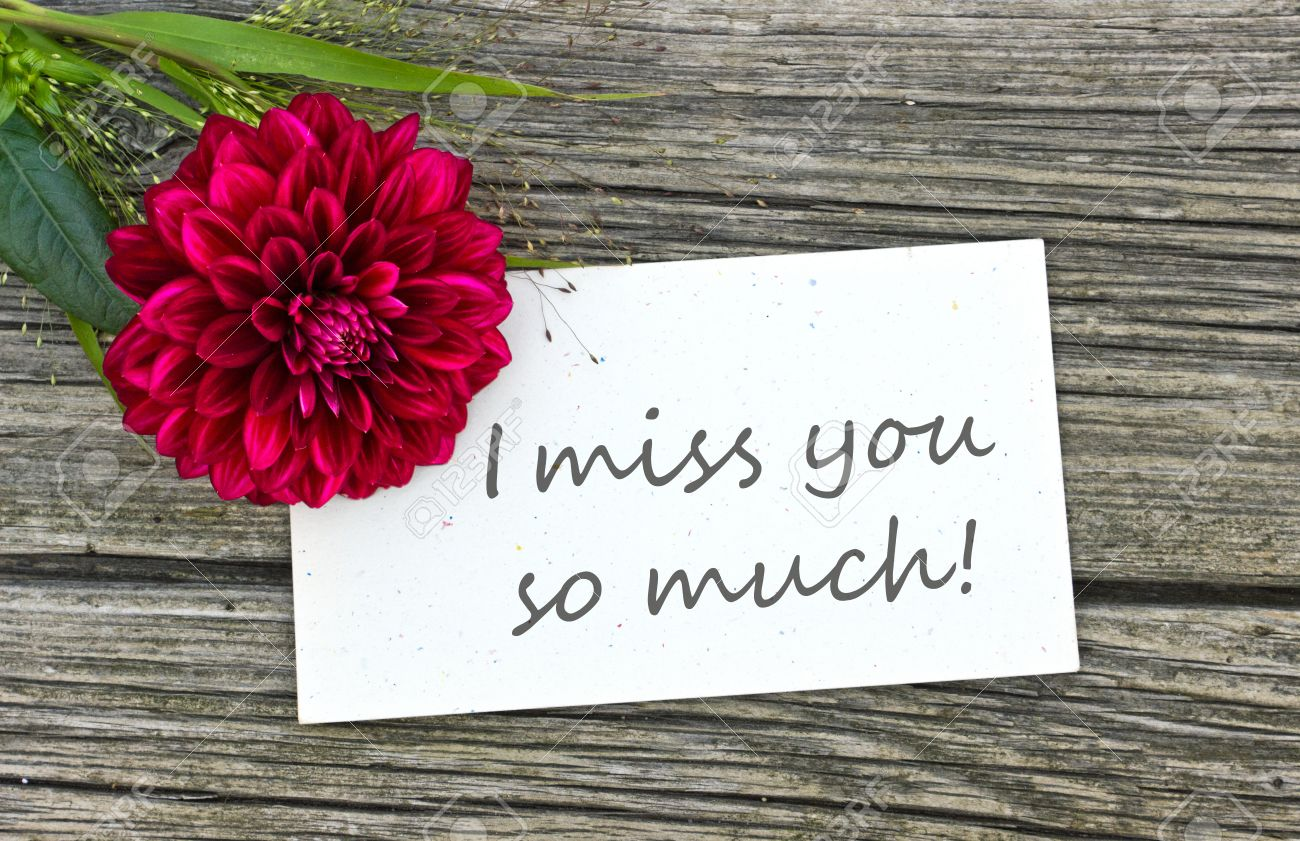 Card I Miss You So Much With Red Flower Stock Photo Picture And
