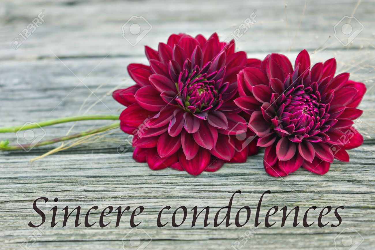 Condolence with red dahlia sincere condolences english Standard-Bild - 23906698
