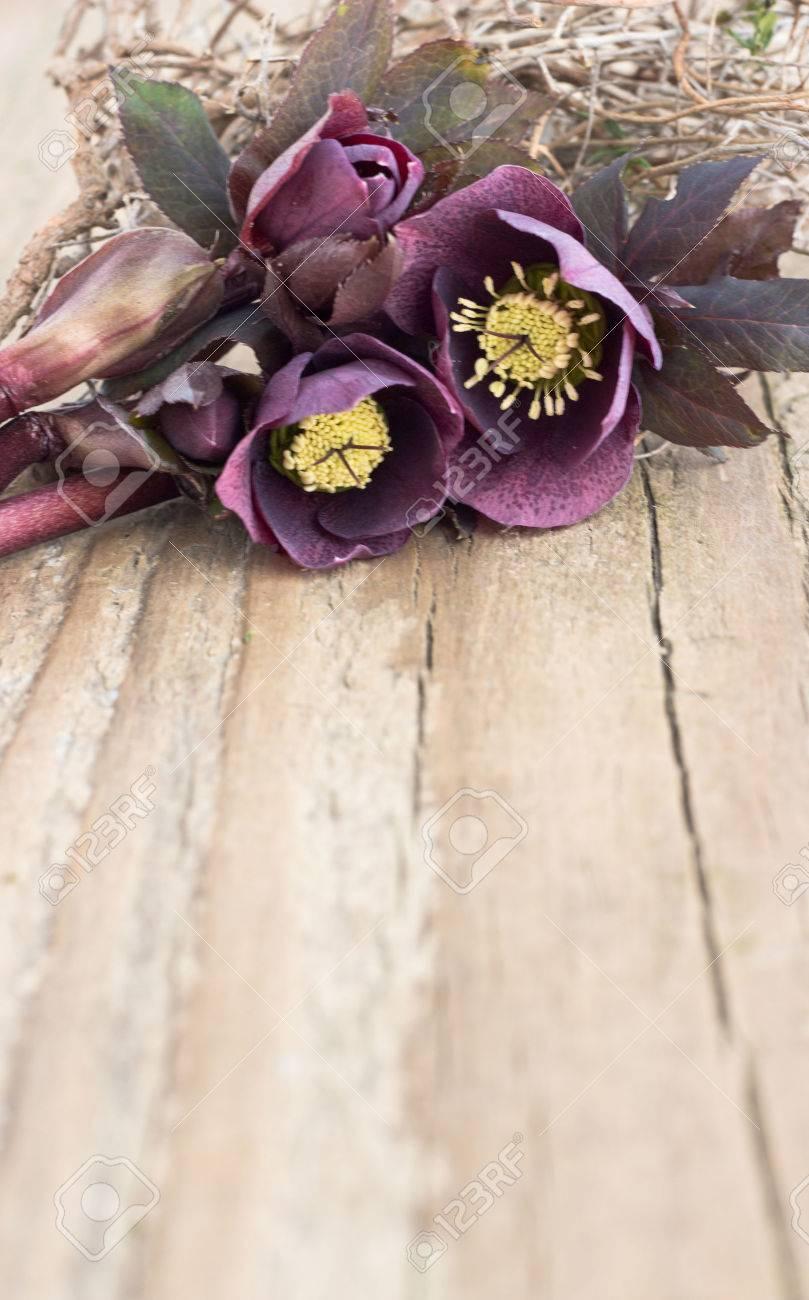 Dark Christroses on a wooden board Standard-Bild - 26349814