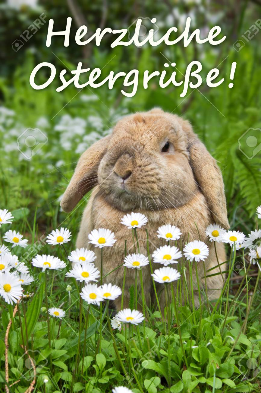 German Easter Card With A Rabbit Stock Photo Picture And Royalty