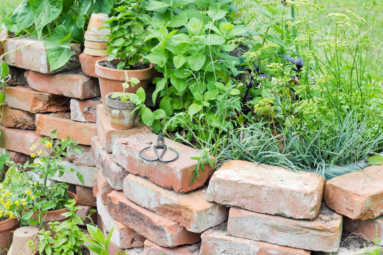 Raised Bed With Herbs Stock Photo Picture And Royalty Free Image
