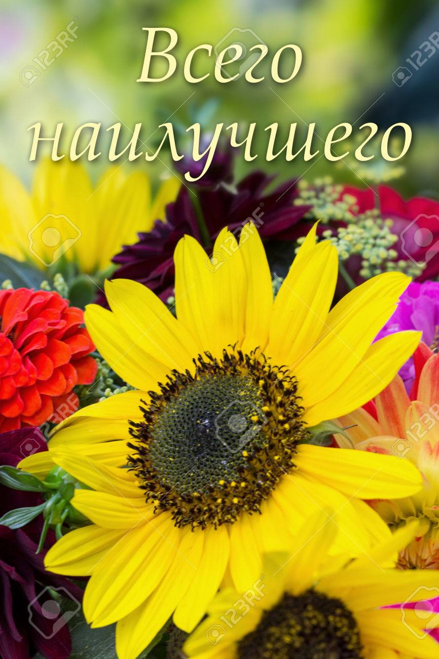 Russian Birthday Card With Summer Flowers Photo Picture And – Russian Birthday Greetings