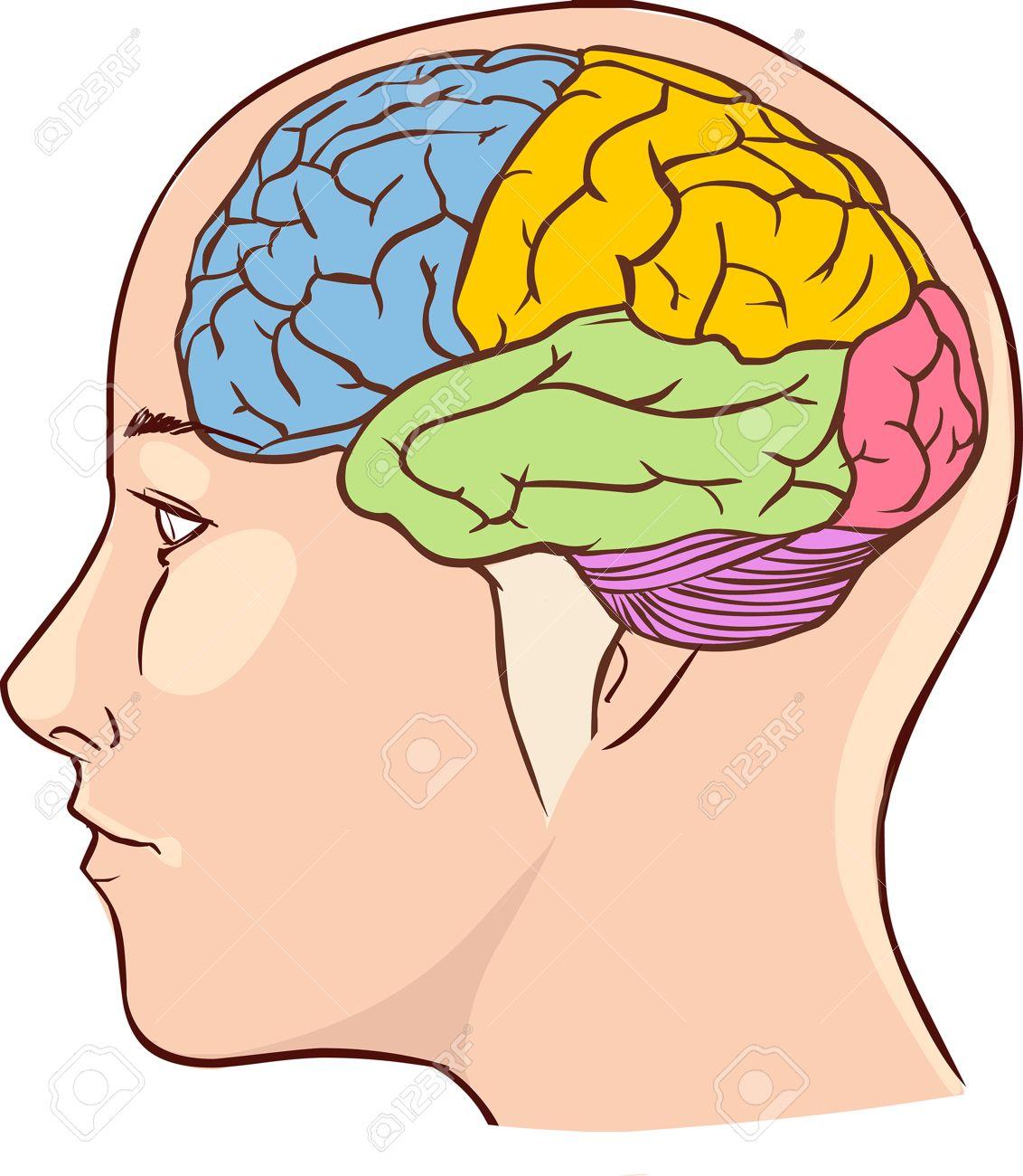 Brain Head Diagram - Block And Schematic Diagrams •