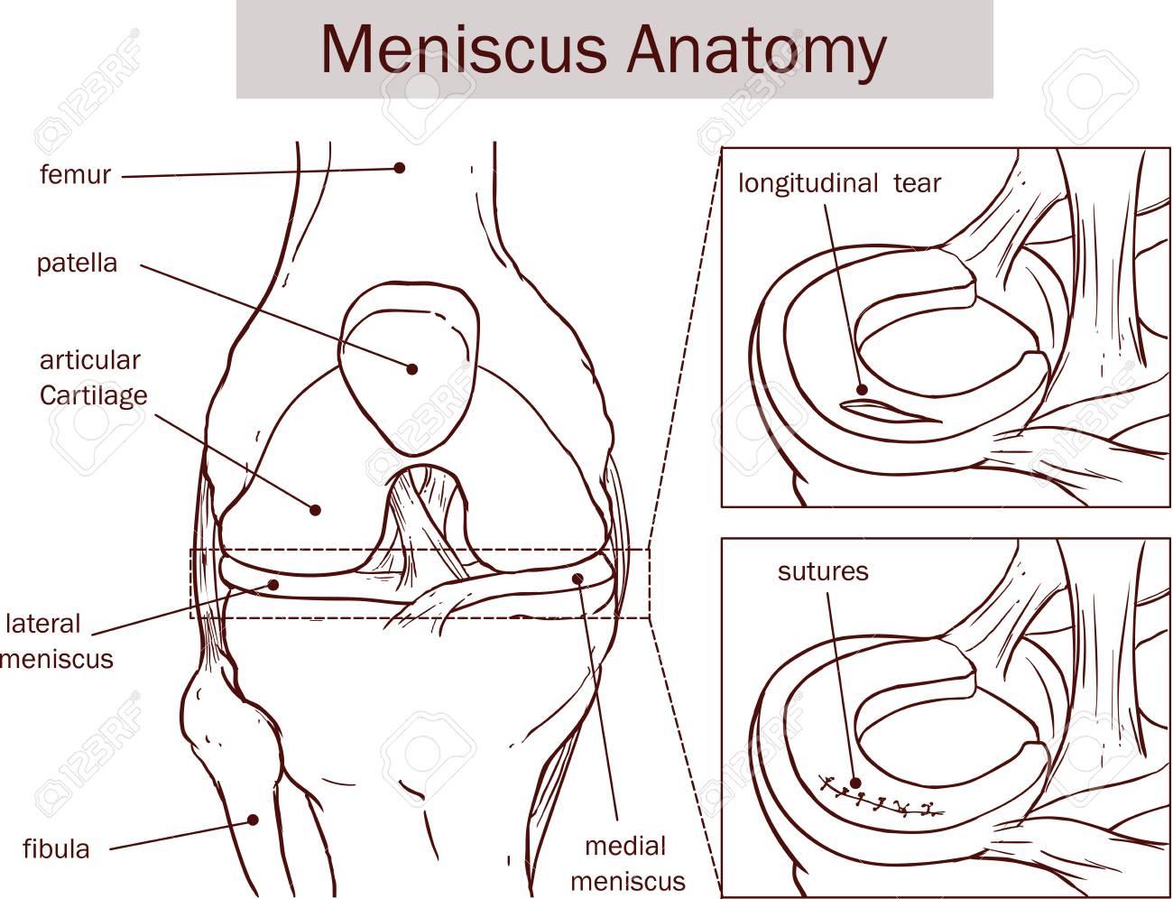Gemütlich Anatomie Der Tränen Ideen - Anatomie Ideen - finotti.info