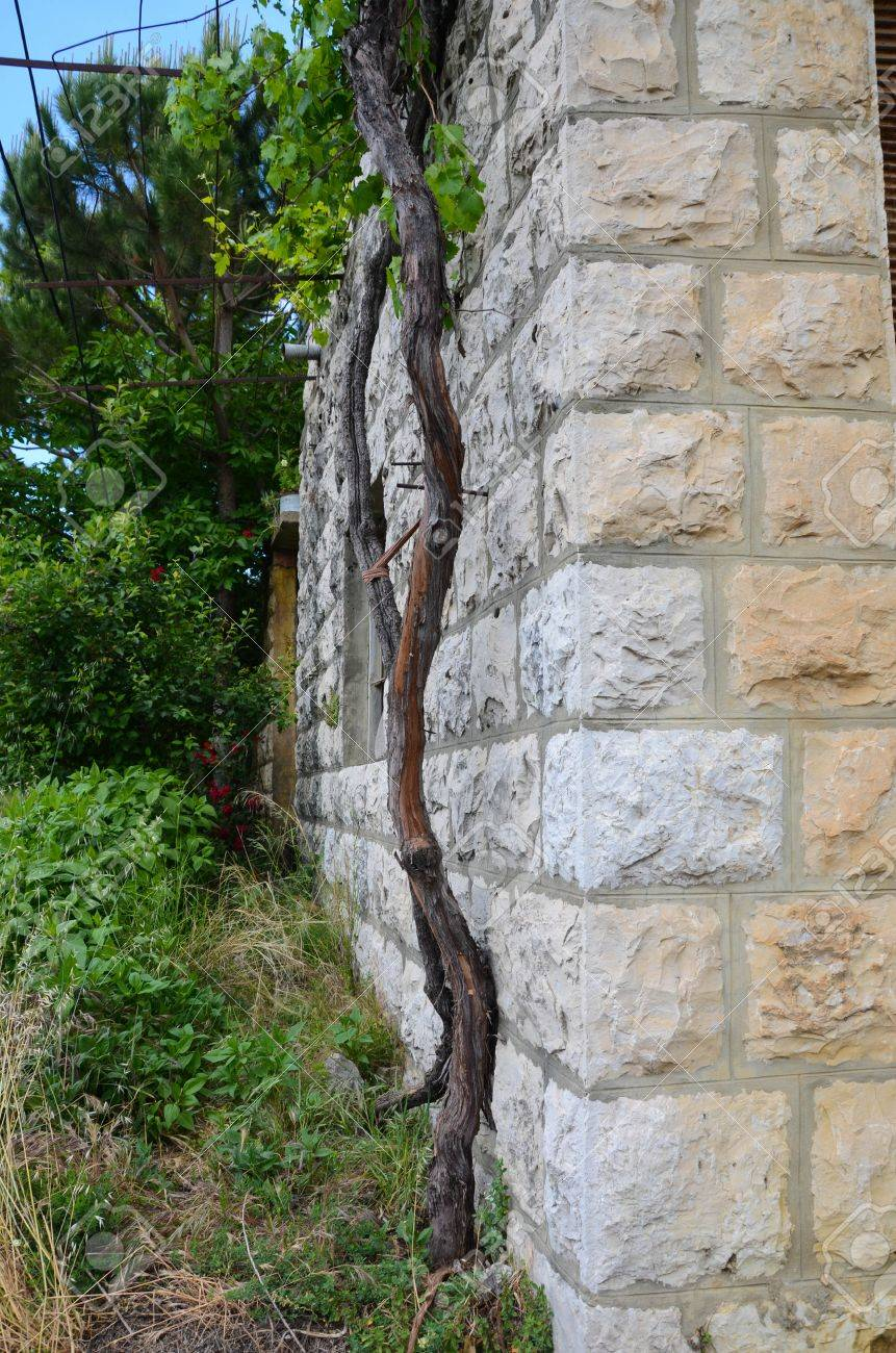kleiner baum wächst neben steinmauer im garten lizenzfreie fotos