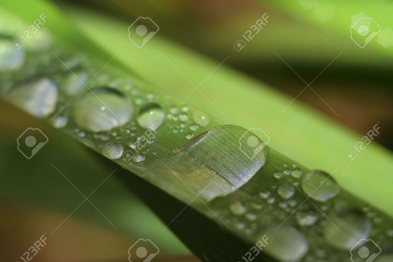 morning dew drops on a grass Stock Photo - 560077
