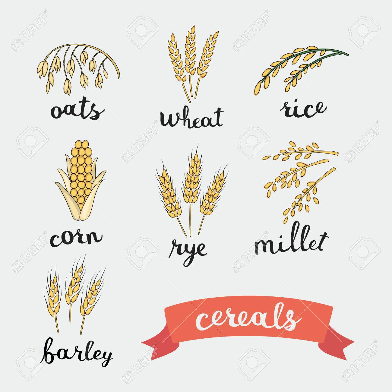 Vector illustration of ripe ears of cereals with inking and lettering names in English - 53261844