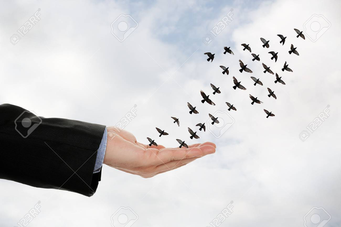 flock of birds forming an arrow flying off a male hand, success concept - 62312526
