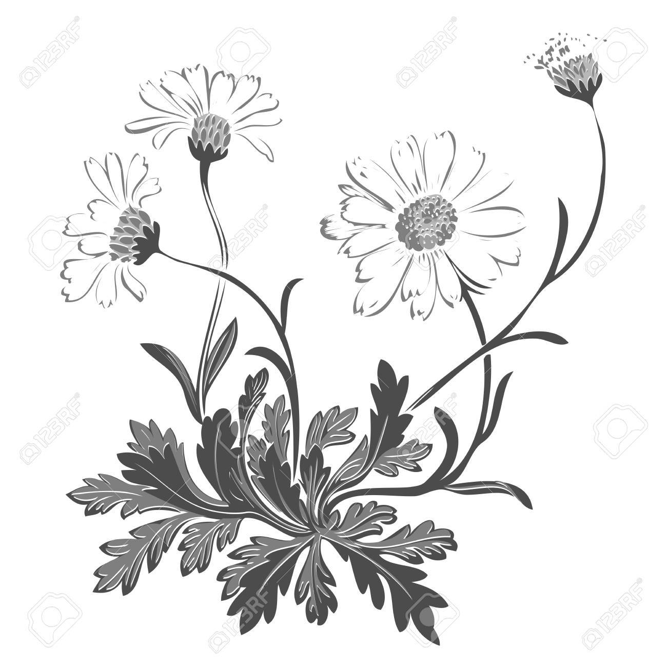 Hand Drawn Bouquet Of Chamomile Flowers Isolated On White Background ...