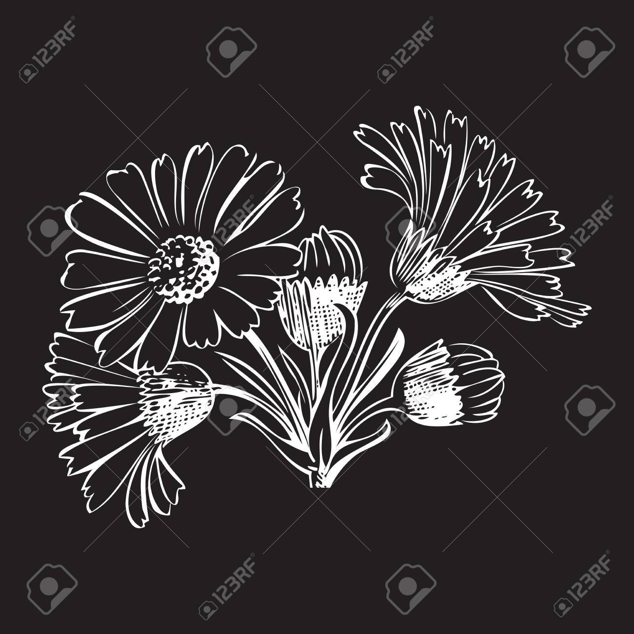 Hand Drawn Bouquet Of Daisy Flowers Isolated On Black Background