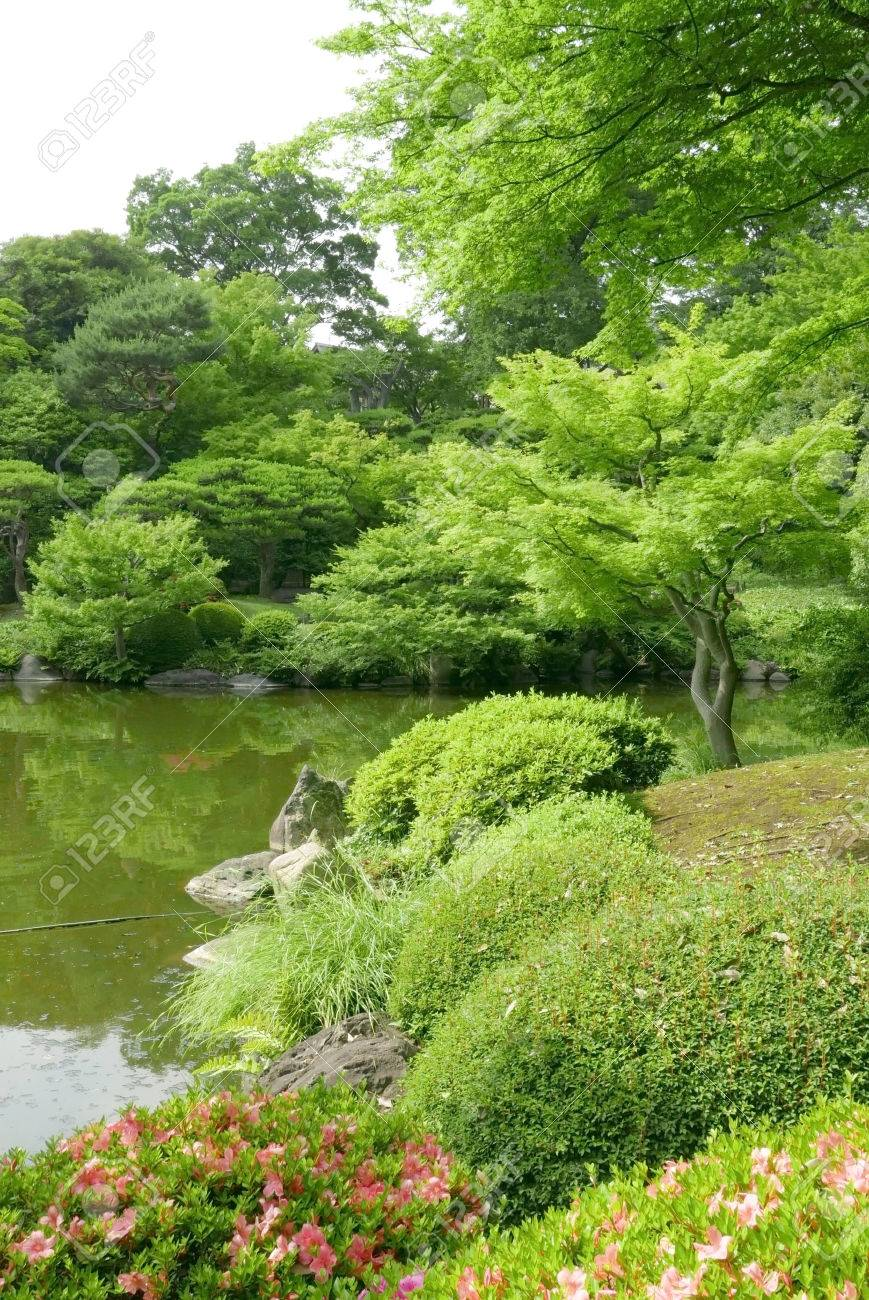 Stock Photo   Vertical Water Pond, Plant, Tree With Reflection In Japanese  Zen Garden