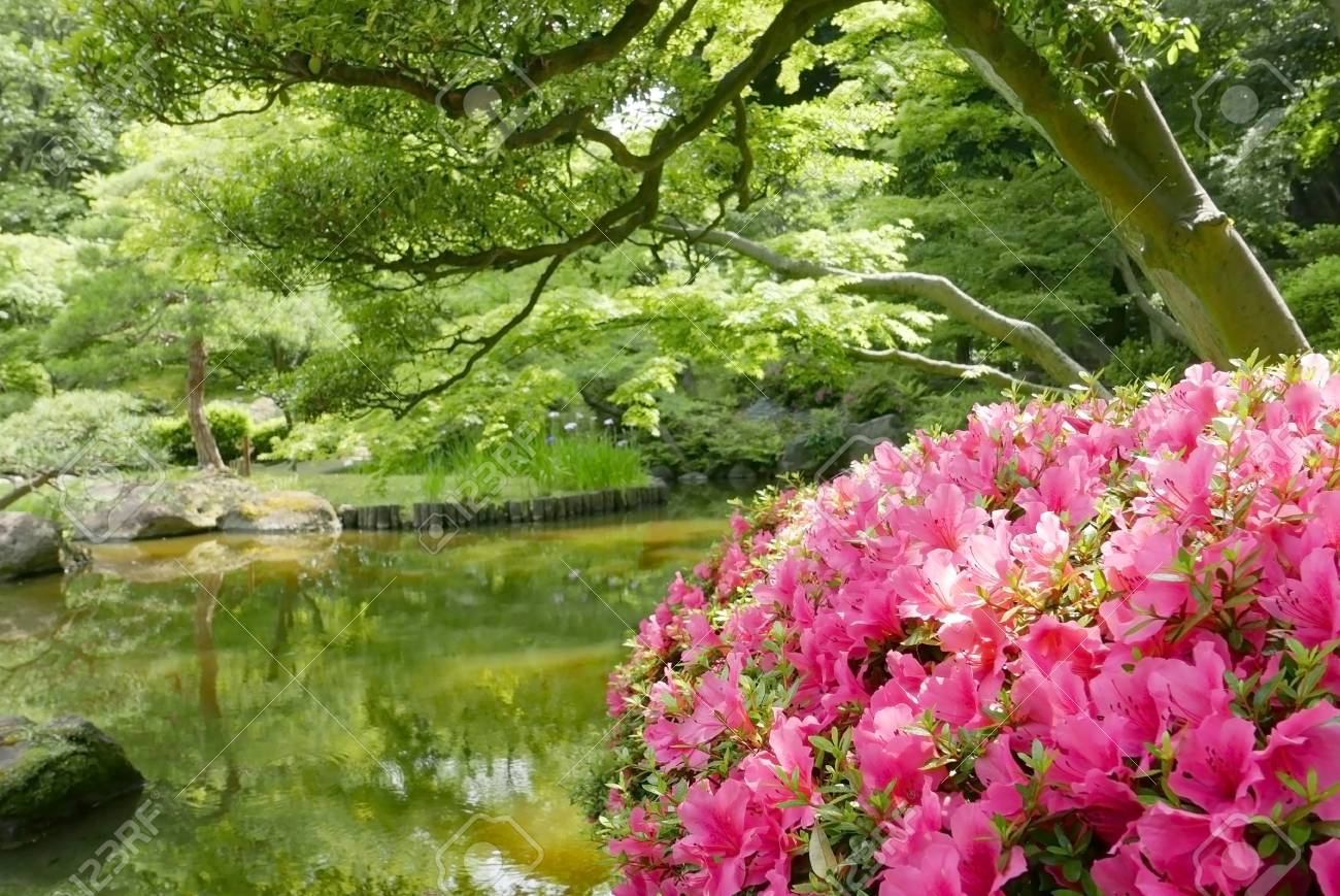 Outdoor Pink Flower Plants And Trees Near The Garden Water Pond Stock Photo
