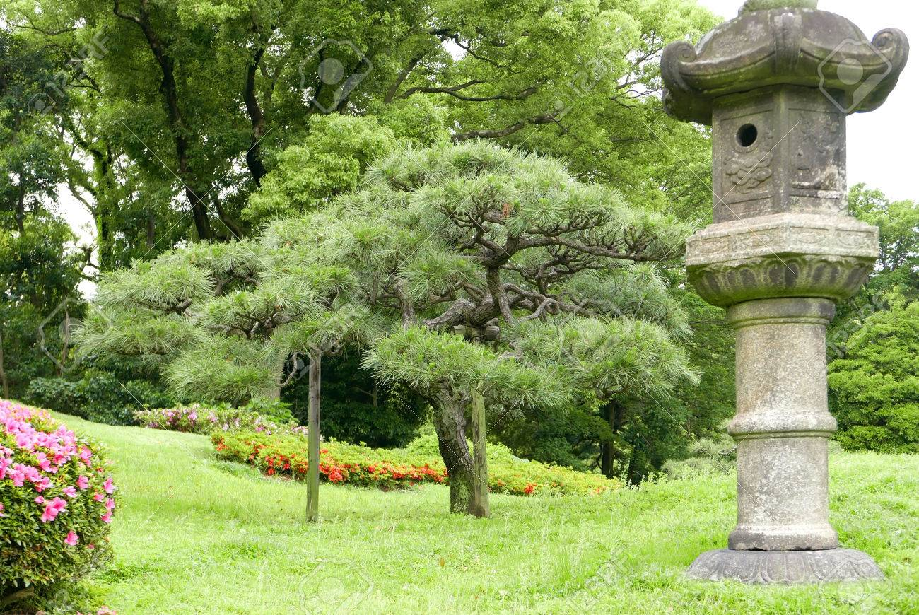 Japanese Outdoor Park Stone Decoration And Pine Trees In The Zen Garden  Stock Photo   60845873