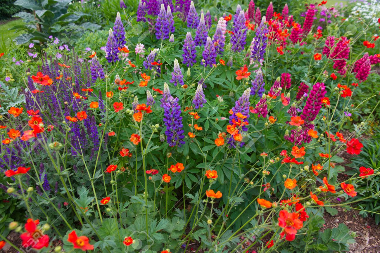 Colourful English Cottage Garden Flower Border Stock Photo