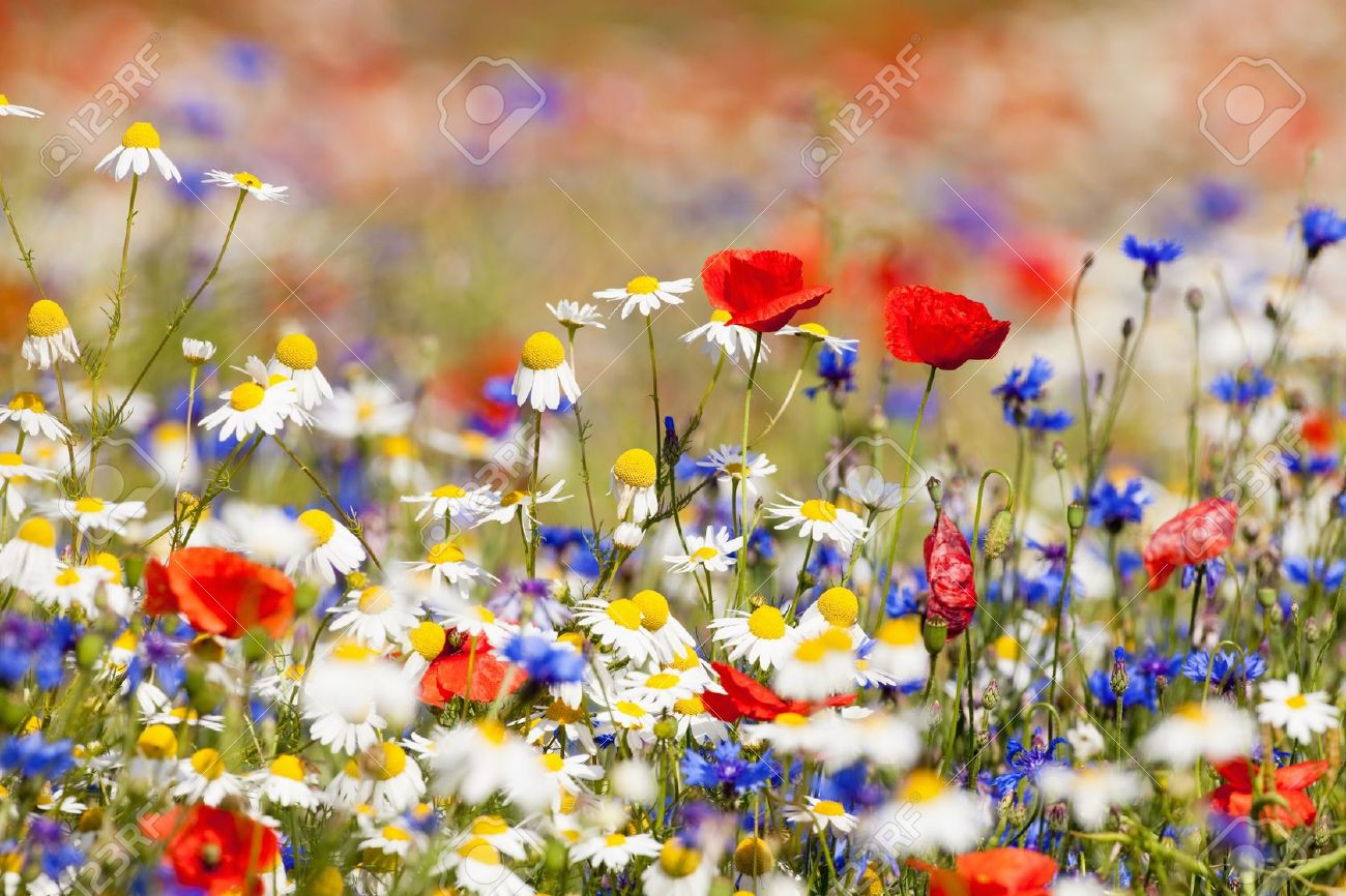 Abundance of blooming wild flowers on the meadow at spring time abundance of blooming wild flowers on the meadow at spring time stock photo 10012673 mightylinksfo Image collections