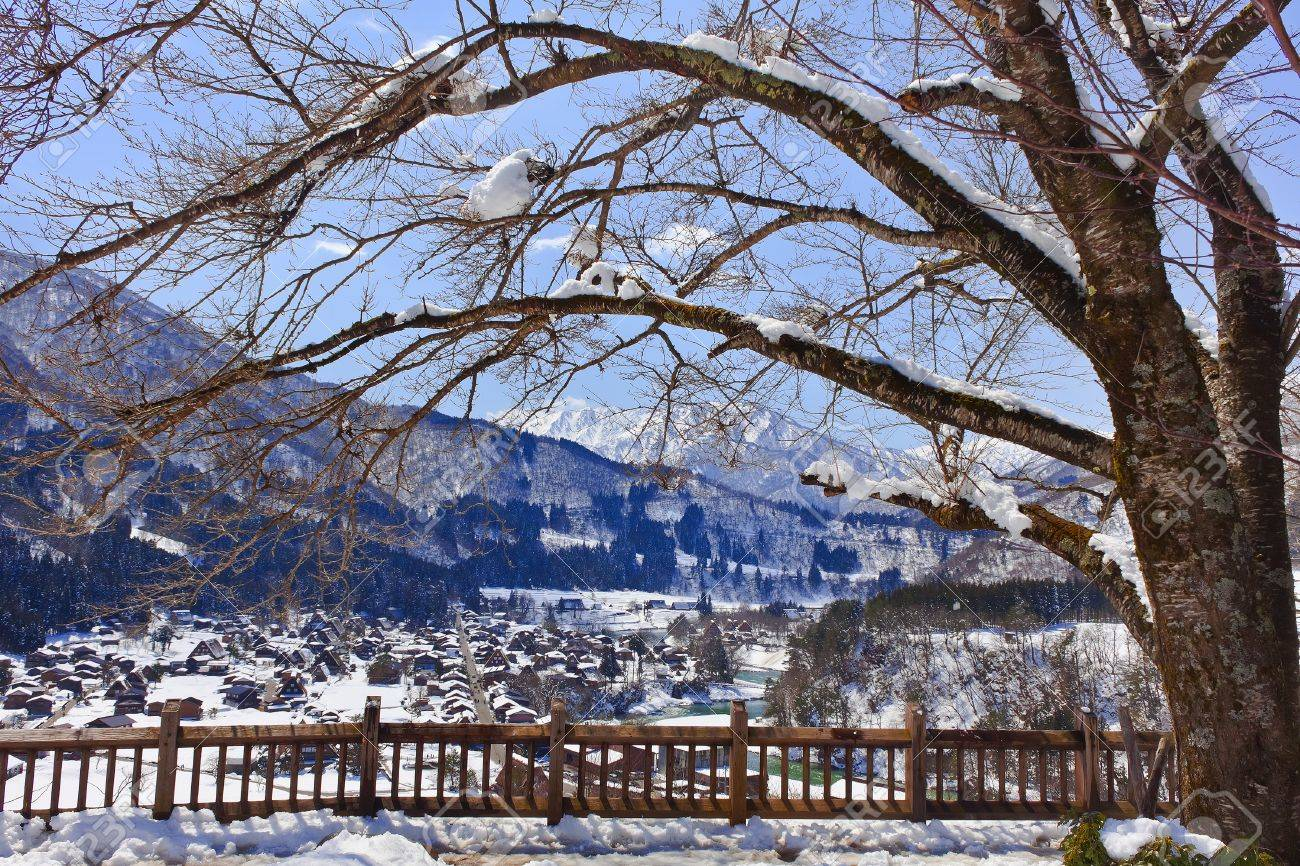 Sakura Tree at the Shiroyama Viewpoint at Gassho-zukuri Village Shirakawago Stock Photo - 14585759