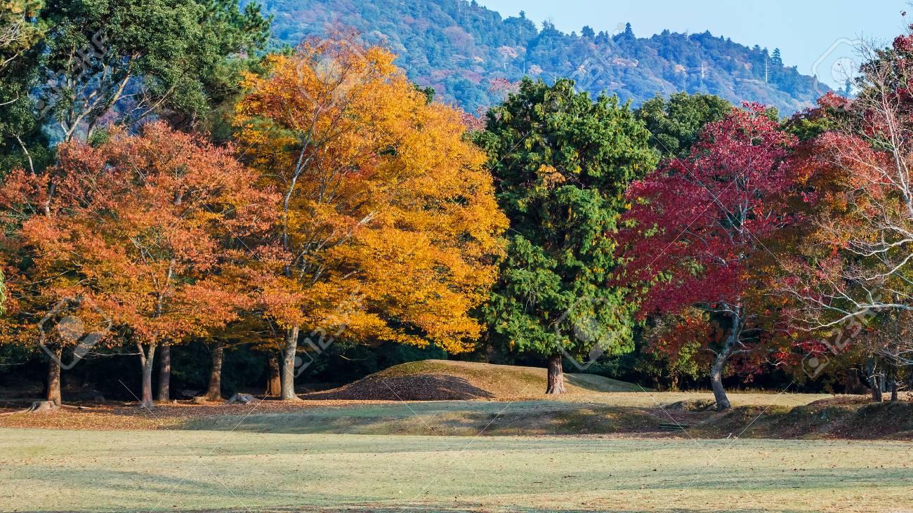 Autumn Laves at Nara Park in Nara Stock Photo - 25080544