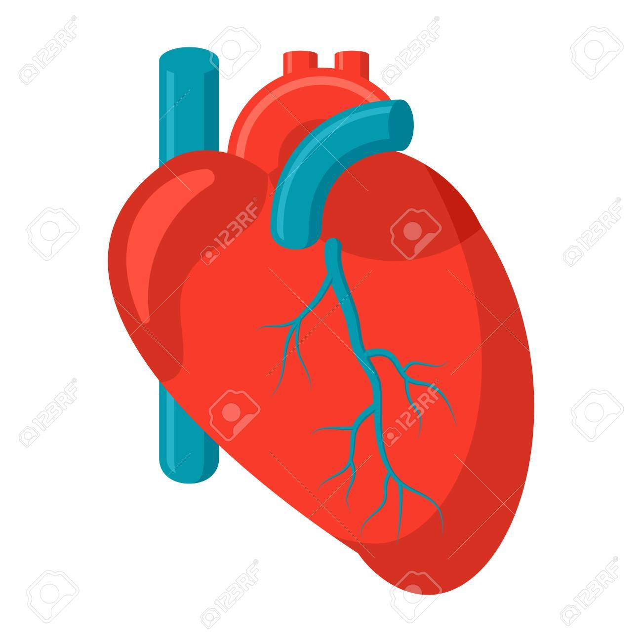 human heart icon royalty free cliparts vectors and stock rh 123rf com human heart vector image human heart vector free