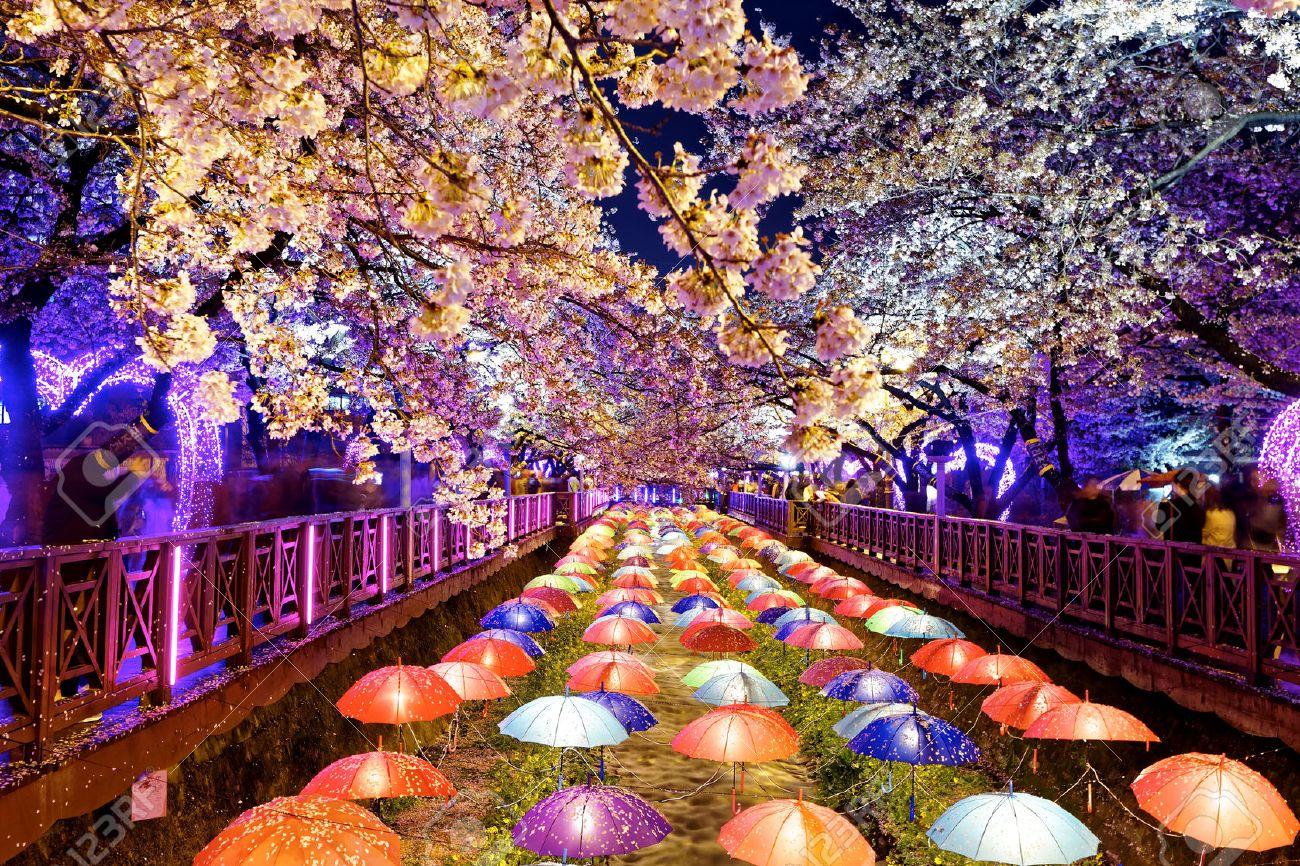 39341022-cherry-blossoms-at-night-busan-