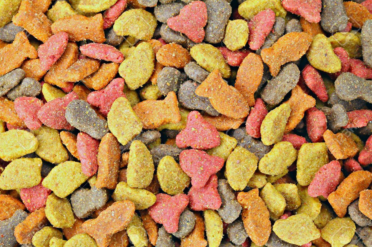 background layer of dry cat food pellets stock photo picture and