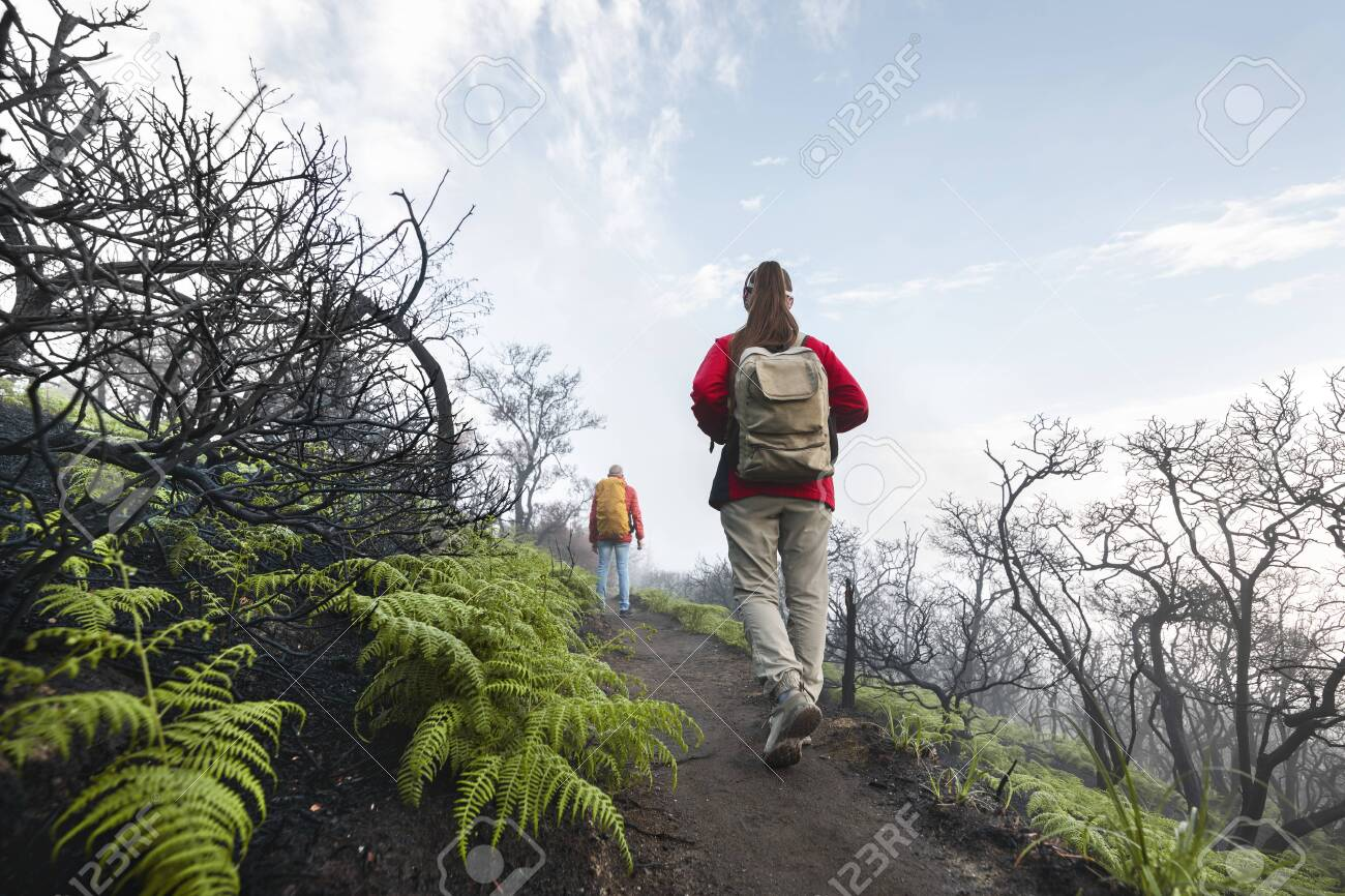 Two tourists with backpacks walks at volcano top in acid clouds and dead trees - 156394250