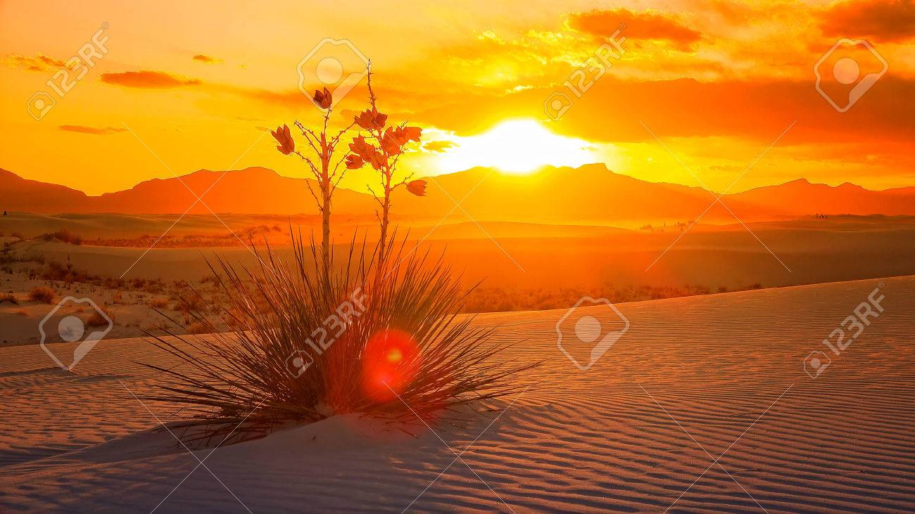 A beautiful sunset of a Yucca plant on the sand dunes at White Sands National Monument in New Mexico - 57069421