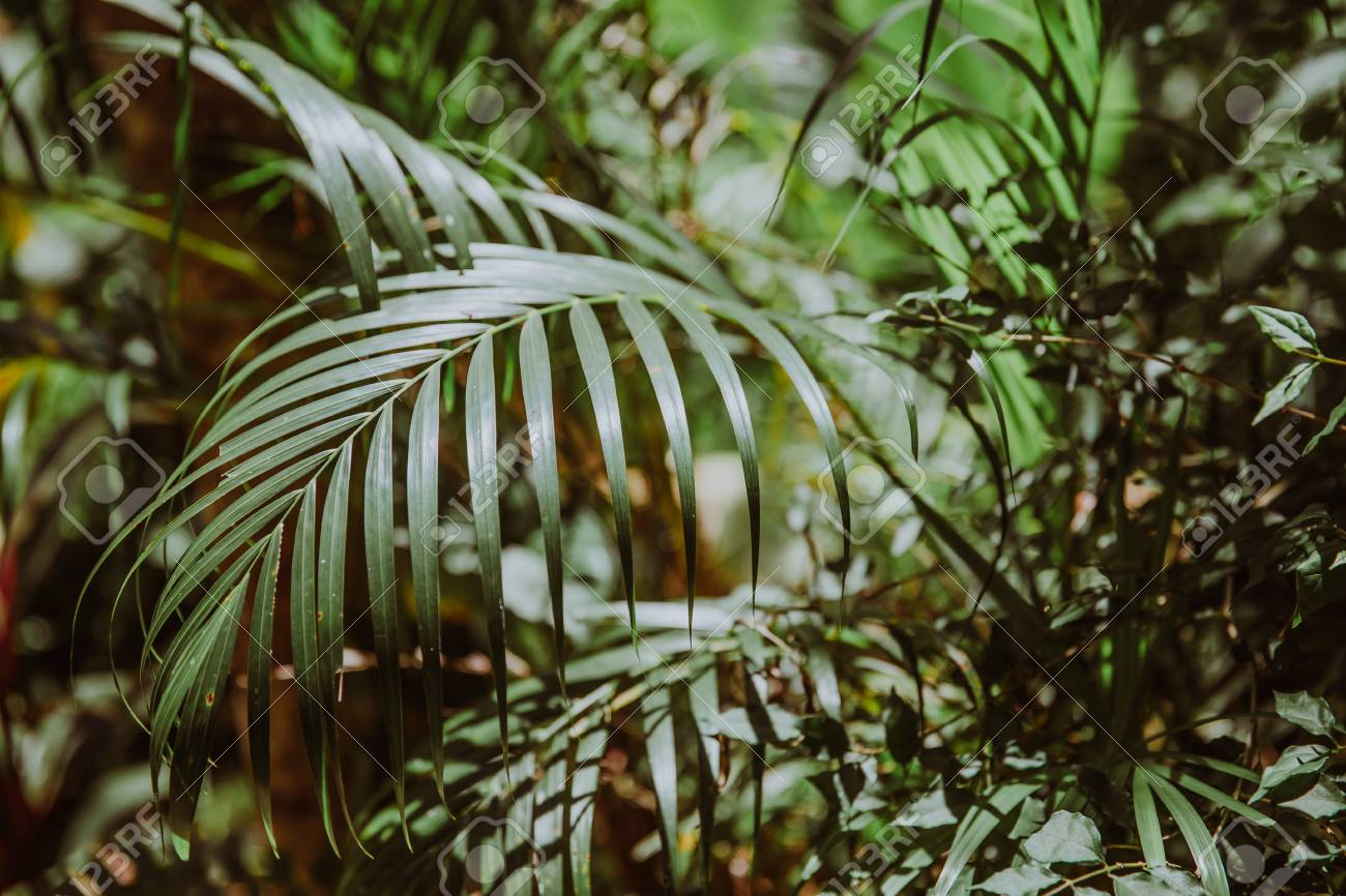 Nature Summer Forest Plant Concept Tropical Green Palm Leaves Stock Photo Picture And Royalty Free Image Image 97237961 Choose from 600+ tropical leaves graphic resources and download in the form of png, eps, ai or psd. nature summer forest plant concept tropical green palm leaves