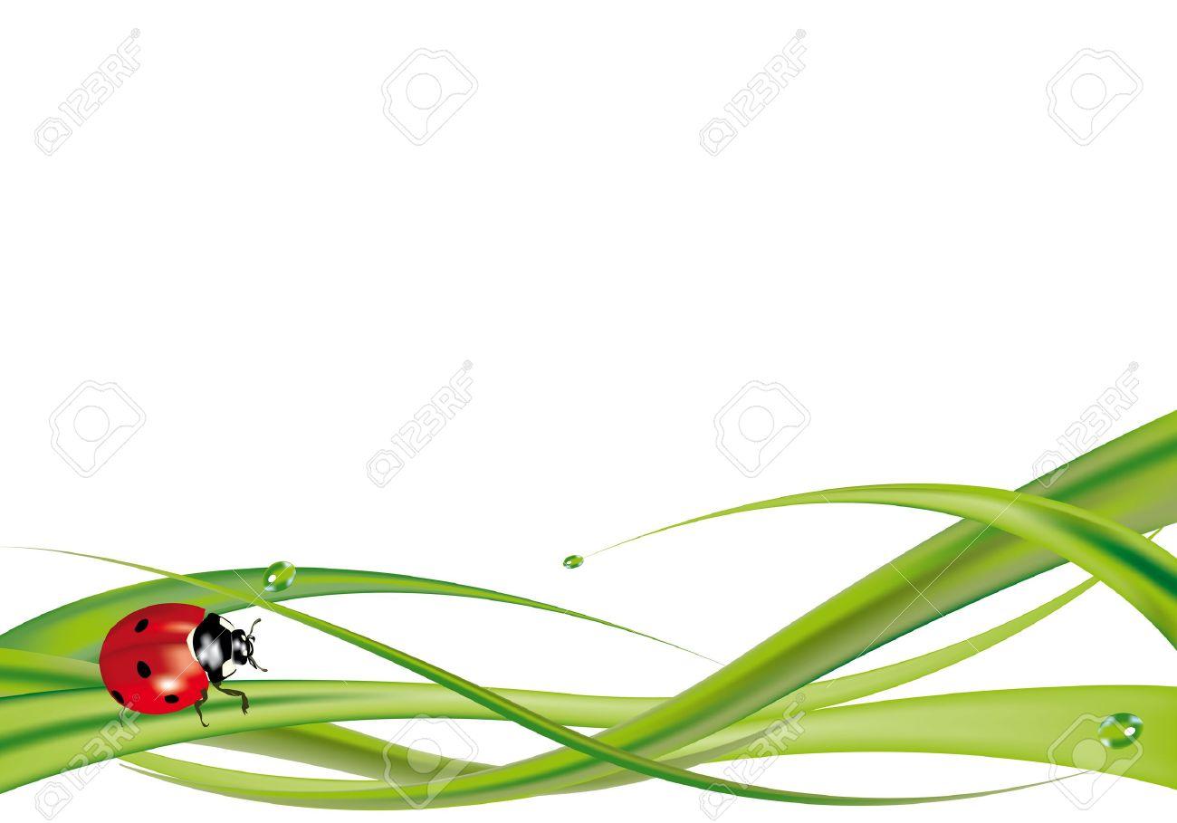 Ladybug on grass isolated on white background - 14163863