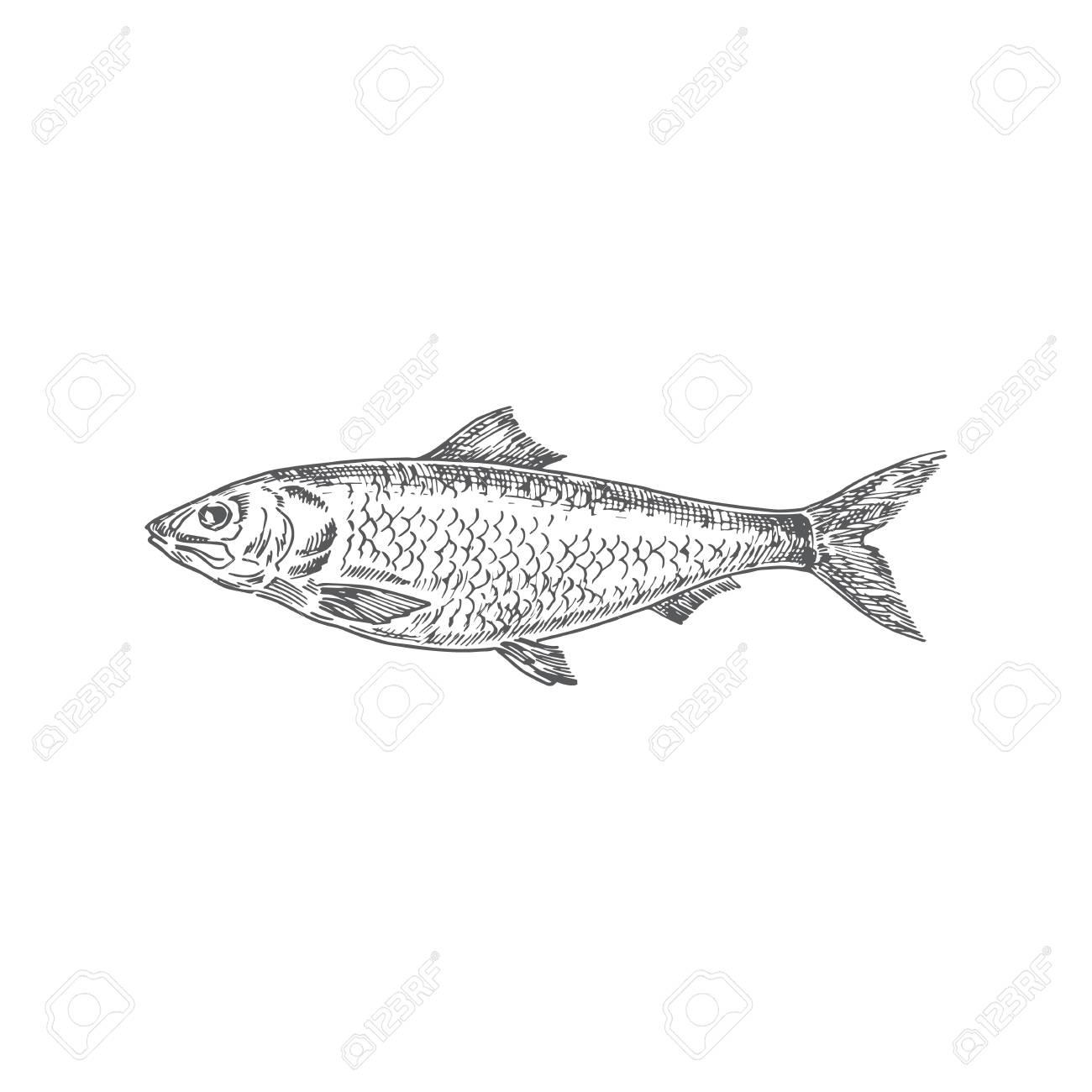 Herring Hand Drawn Vector Illustration Abstract Fish Sketch