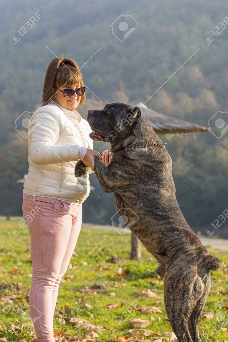 girl hacing fun with her cane corso dog in the park stock photo 47802048