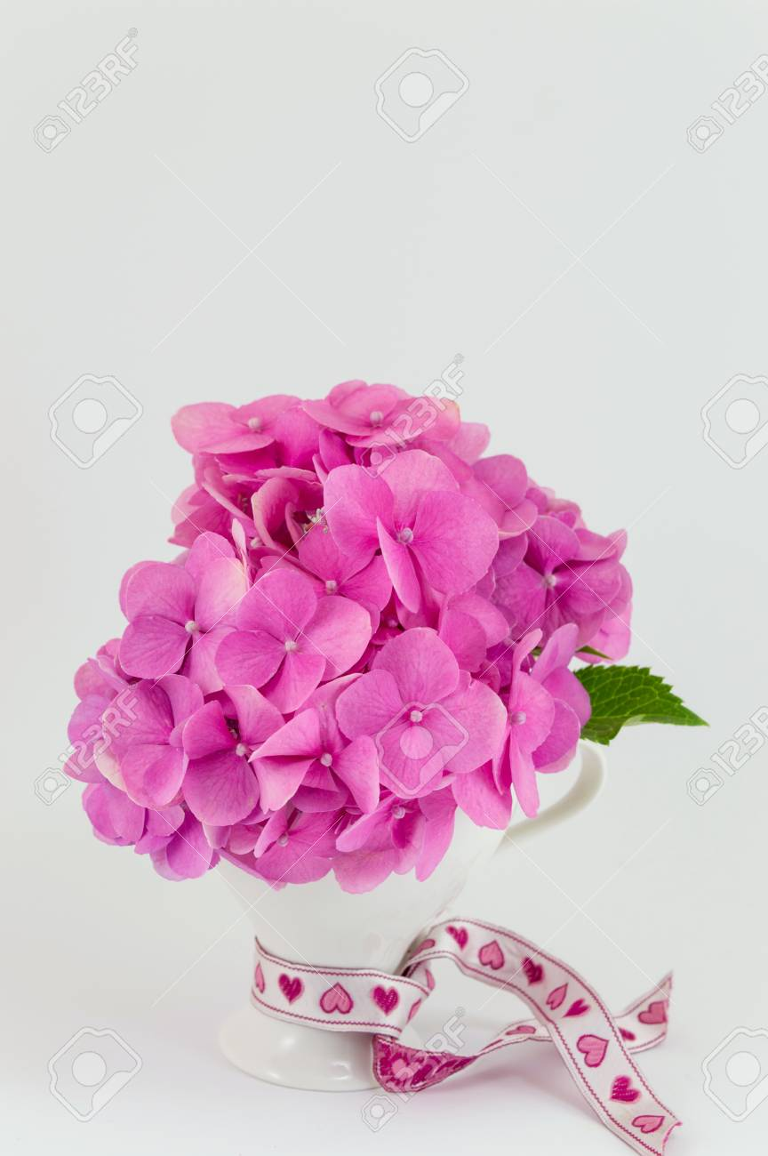 Bunch Of Hortensia Pink Flowers In A Vase On White Background Stock