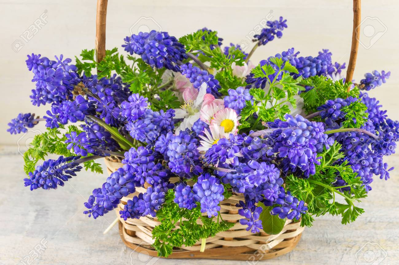 Bluebell Flowers Bouquet In A Wicker Basket Stock Photo Picture And Royalty Free Image Image 70200593