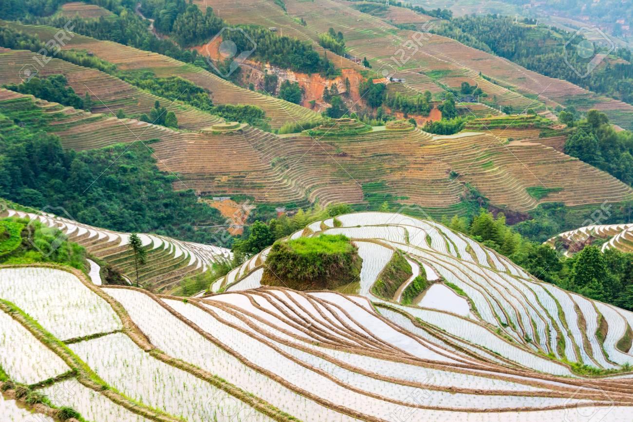 Campo De Arroz En Terrazas En Longji área De Guilin Guangxi China