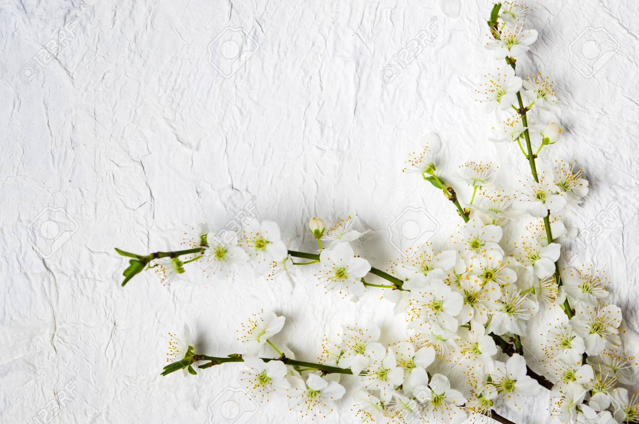 White Lilac Flowers Arrangement On White Fabric Top View Stock Photo