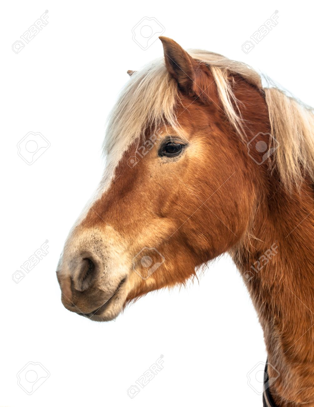 Head Of A Cute Horse On White Background Horses And Humans Interact Stock Photo Picture And Royalty Free Image Image 39319803
