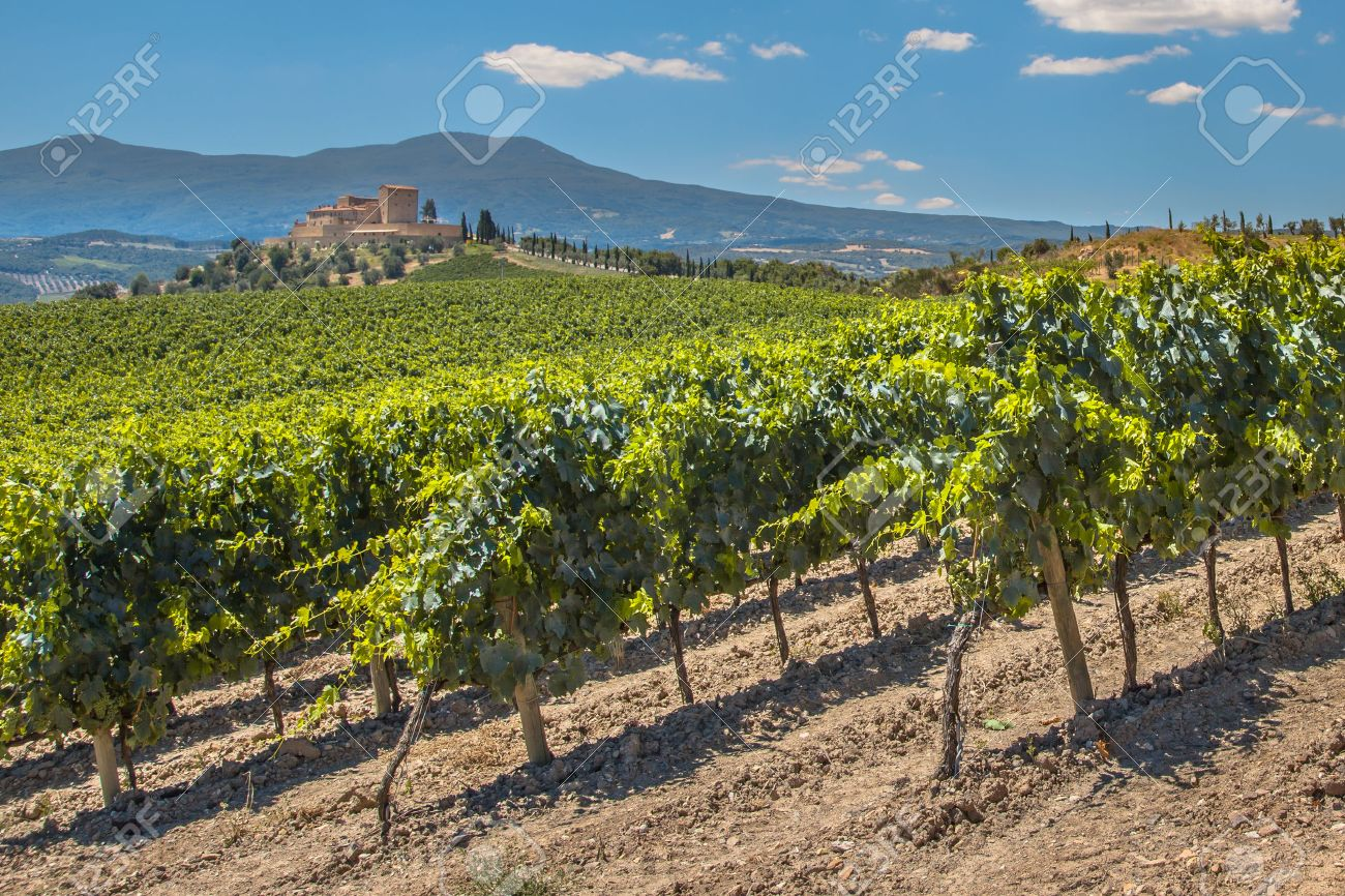 Castle Overseeing Vineyards with Rows of grapes from a Hill on a Clear Summer Day - 45801420