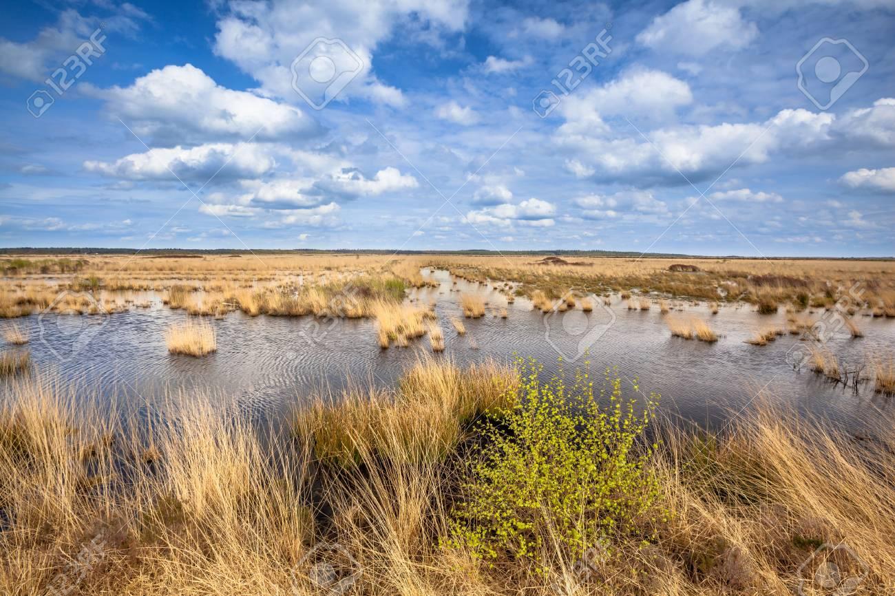 Paysage 2000 concernant image de paysage de tourbières hautes dans la réserve naturelle